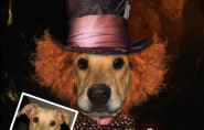 Mad Hatter Alice & Wonderland Custom Pet Portrait